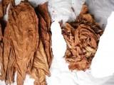 Tytoń burley tennesse