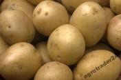 Kupię ziemniaki jadalne kaliber +45 - ilości TIR