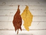 Liście tytoniu Virginia, Burley, Skryniowski M