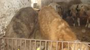 Byczki
