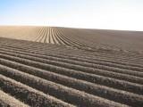 Gospodarstwo rolne , ziemia orna 600 h