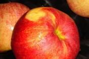 Jabłko Przemysłowe - Suchy Przemysł
