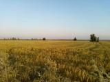 gospodarstwo rolne 3500 hektarow, ziemia orna