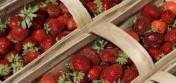 sprzedam owoce truskawek deserowych