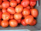 Pomidor gruntowy lima lub okrągły