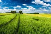 gospodarstwo 208 hektarów ziemia orna