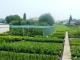 Tuje żywopłotowe i ponad 200 odmian krzewów.