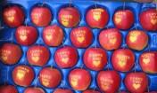 Sprzedam jabłka z napisem I LOVE YOU z serduszkiem