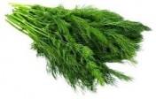 szukam stałych odbiorców kopru zielonego  na rok 2015