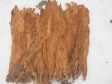 Liście Tytoniu Burley w klasie 2