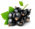 Super Fruit Group - sprzeda owoce czarnej i czerwonej porzeczki
