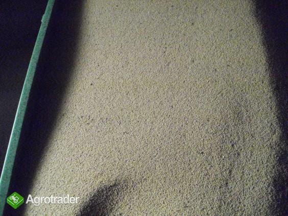Gorczyca biała  - zdjęcie 1