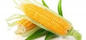 Sprzedam kukurydze