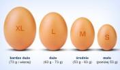 Kupie Jajka klatkowe M oraz L