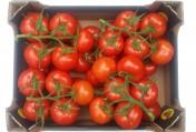 Sprzedamy pomidory czerwone na gałązce