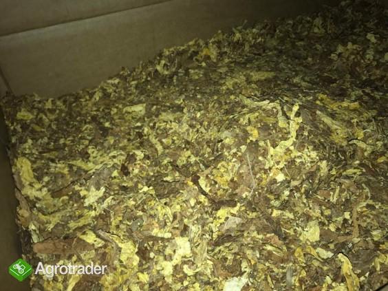 Liscie tytoniu, strips, całe, virgnia, scraps, american blend, dowóz. - zdjęcie 1