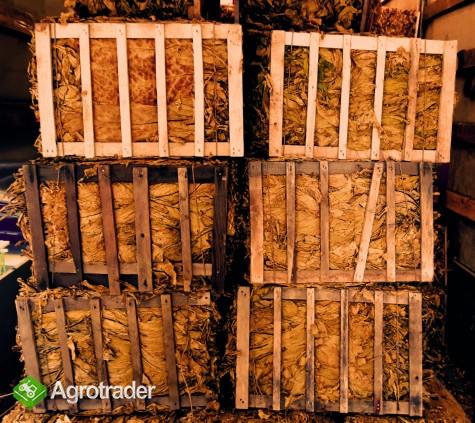 Liście Tytoniu BALE TONGA Bułgaria VIRGINIA I GATNEK - zdjęcie 2