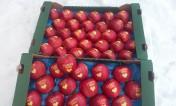Sprzedam jabłka z napisem I LOVE YOU i KOCHAM CIĘ z serduszkiem