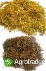 tytoń kg  65 zl kg  szybka dostawa tani lekki wydajny  736-903-355