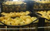 Owoce i warzywa prosto z Hiszpanii