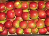 Sprzedam jabłka