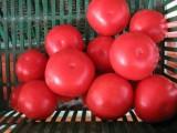 pomidor gruntowy,ogórek gruntowy,papryka