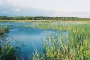 Puszcza Sandomierska 231 ha