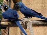 zdrowy przyjęcia papugi już dostępna