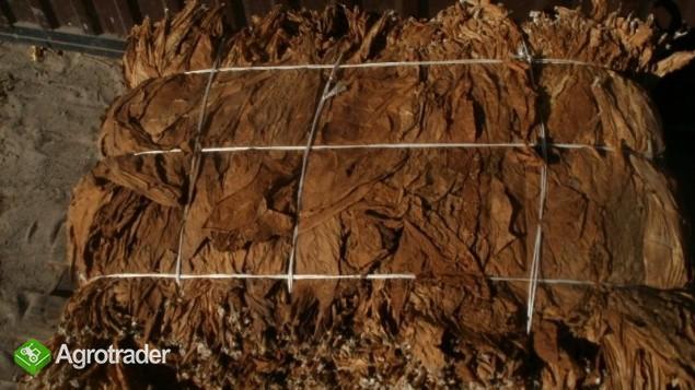 liście tytoniu burley i virginia ( mocny i słaby) - zdjęcie 2