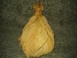 tytoń virginia liście