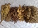sprzedam liście tytoniu. po fermentacji najlepsze!